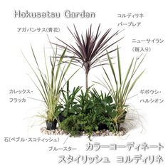 Dry Garden, Garden Paths, Home And Garden, Garden Landscape Design, Garden Landscaping, Garden Entrance, Architecture Images, Garden Theme, Plant Design