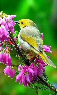 Beautiful Pretty Birds, Beautiful Birds, Animals Beautiful, Beautiful Places, Rare Birds, Exotic Birds, Tropical Birds, Colorful Birds, Bird Pictures