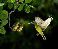 """Beautiful """"@gede_prama: Love nourishes both the receiver and the giver.. http://bellofpeace.org @Funny Tweets!™: pic.twitter.com/izmznDENXS"""""""