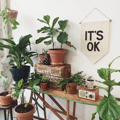 Moved most of my house plants over to the studio yesterday because my house has been too dark and cold... Now it's officially turning into a jungle in here and it only makes me want more!