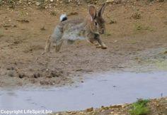 Rabbit, Nature, Wildlife Photography, Life Spirit, Mark Conway