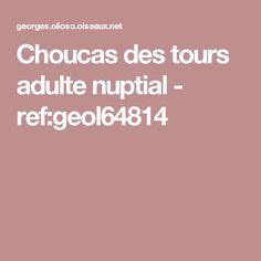 Choucas des tours adulte nuptial - ref:geol64814 Choucas Des Tours