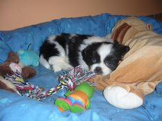 Untitled Dogs, Animals, Animales, Animaux, Doggies, Animal, Animais, Dieren, Pet Dogs