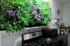 This DIY hydroponic wall system features an inorganic mat sandwiched between waterpoof PVC panels. Plants grow in slits in the PVC, and a pipe at the top supplies water and nutrients. A skylight or grow lights will keep indoor herbs happy.