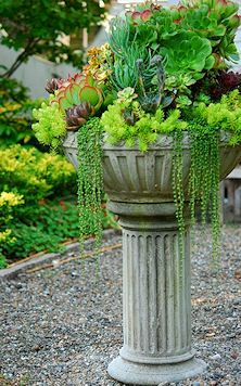 Succulents in a pedestal planter