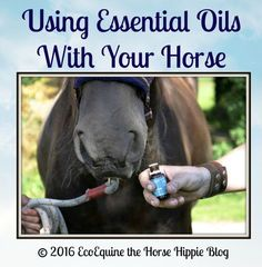 Using Essential Oils With Your Horse Cover