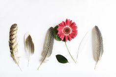 Feathers Art Modern Minimal Botanical 8x12 Archival Photograph. $30.00, via Etsy.