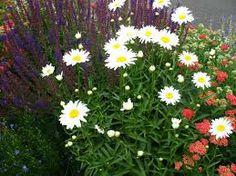 -Bella Giardino Landscape and Garden Design - Colorado Springs, CO