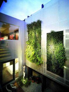 maison de design moderne avec mur végétal extérieur super: