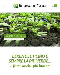 42 Likes, 4 Comments - WebInformatica Canton Ticino, Line, Alternative, Herbs, Website, Luxury, Instagram, Fishing Line, Herb
