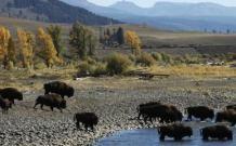 Yellowstone National Park | National Park Foundation