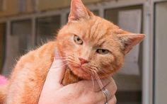 Nine-year-old Garfield is back at his home in Cardiff after Cats Protection's Bridgend Adoption Centre managed to track down his owner after 7 years!