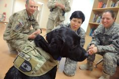 Military staff personnel surround Zeke, a therapy dog, at the Role 3 NATO medical facility at Kandahar military base in southern Afghanistan on Aug. 19. Zeke, a 5-year-old Labrador retriever who has a rank of sergeant first class, is trained to help soldiers struggling with stress and war trauma.