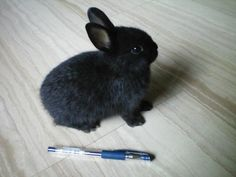 Here's a pen.  Time to make a grocery list.  Let's see, we need carrots, bananas, parsley and spinach