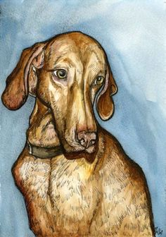 Hungarian Vizsla  Art Dog Print by AlmostAnAngel66 on Etsy, £15.00