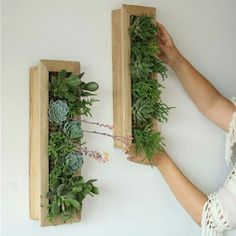 21 Amazing Succulent Wall Art To Be Hang on The Wall Succulent Wall Art 20 Result Succulent Outdoor, Succulent Wall Art, Succulent Landscaping, Succulent Gardening, Types Of Succulents, Cacti And Succulents, Planting Succulents, Garden Wall Designs, Garden Design