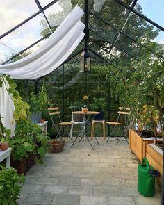 My little paradise 😇#tomatoes #cucumber #chillies #basil #greenhouse #homegrown #julianadrivhus #drivhusglæder