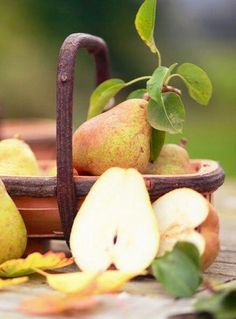 Pears Fresh & Juicy