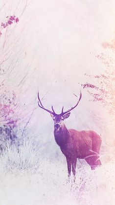 deer wallpaper iphone 6
