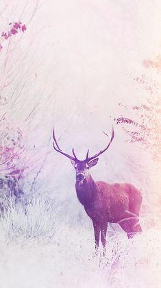 deer wallpaper iphone 6