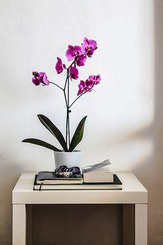 orchidee in pot voor in de badkamer, bijv. boven het toilet in een nis.