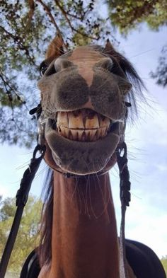 too funny, horse , smiling horse, love it, great photo, taken this year, say cheeeese, must love animals, must love hors