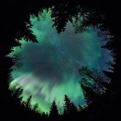 Forest and Beyond (by Jamen Percy) #northernlights #aurora