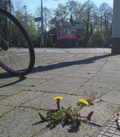 Blijdorp Stadhouderslaan foto: Heleen van Zantvoort Rotterdam, Sidewalk, Side Walkway, Walkway, Walkways, Pavement