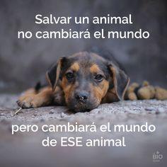 Salvar a un animal no cambiará el mundo, pero cambiará el mundo de ESE animal