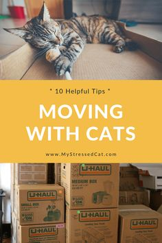 Check out tip and find out how your moving boxes can actually reduce your cat's anxiety about the move. 10 Helpful Tips For Moving With Cats. Moving Day, Moving Tips, Cat Care Tips, Pet Tips, Dog Care, Cat Urine Smells, Kitten Care, Moving Boxes, Cat Carrier