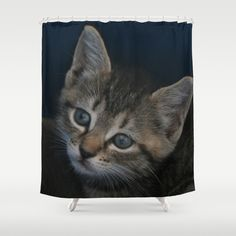 1 of 8 DPG150829a Shower Curtain  This kitten was rescued from certain death by one of my besties. I was able to photograph this cutie and his siblings during transport to the shelter that agreed to take them, treat them and find homes for them. I've drastically reduced my take on this collection of prints and encourage anyone who buys them to make a donation to magi-catrescue.org to help over the cost of their care and placement.