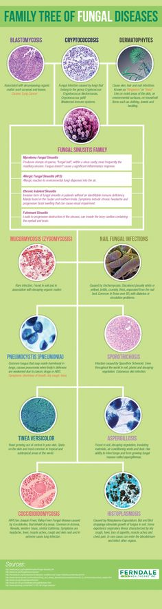 Family Tree of #Fungal Disease Infographic
