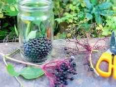 Bezinky otrháme z třapců - jde to dobře třeba vidličkou. Štáva hodně barví, kdo nechce mít pár dnů barevné prsty, použije tenké rukavice.Bezinky... Blackberry, Mason Jars, Fruit, Outdoor Decor, Plants, Food, Fitness, Syrup, Meal