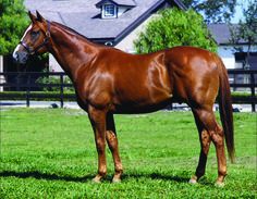 Swiss Yodeler(1994)Eastern Echo- Drapeau By Raja Baba. 4x4 To My Babu, 5x5 To Nearco & Ribot. 24 Starts 6 Wins 1 Second 8 Thirds. $761,442. Won Hollywood Futurity (G1), Best Pal S(G3).