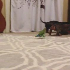 Bird wants to play too! http://ift.tt/2jSrgyy