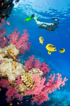 The 25 Most Beautiful Places Around The World To Go Snorkelling - BlazePress