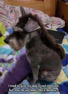 20 perros FORZADOS a vivir con el corte de pelo más horrible del mundo