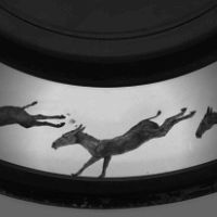 Movie projector - Wikipedia, the free encyclopedia