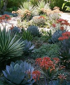 Succulent Landscaping, Front Yard Landscaping, Planting Succulents, Landscaping Ideas, Modern Landscaping, Succulent Plants, Landscaping Plants, Drought Tolerant Landscape, Drought Resistant Landscaping