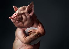 Funny animal photo manipulation by Post Production - Sao Paulo, advertising agency Funny Animals, Cute Animals, Pig Art, Best Ads, Creative Advertising, Advertising Agency, Advertising Design, Print Ads, Print Pictures