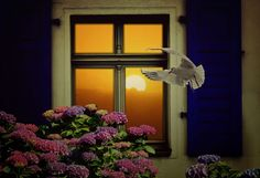 #bird #composing #composition #country life #cozy #decorative #fly #holiday #home #housewife #hydrangea #lattice windows #mirroring #mood #outlook #peaceful #seagull #shutter #still life #sun #sunlight #window