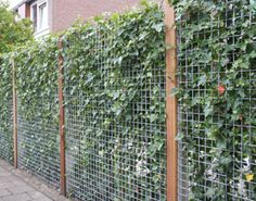 Hogwire Fencing With Steel Panel Behind It Grow Vines Up