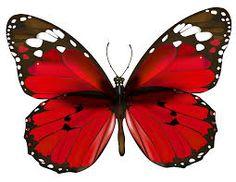 Risultati immagini per butterfly