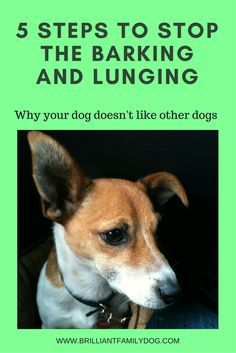 Once you know WHY your dog is acting like this, you have a way to change things for the better.