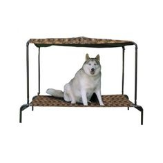 Bed Elevated Outdoor Cot Pet Dog XL Raised Bed Hammock Style