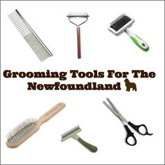 A Newfoundland's coat requires daily care and maintenance so we've put together a list of the most common grooming tools used on the Newfoundland.