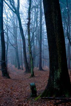 Taunus foggy path in Glashütten