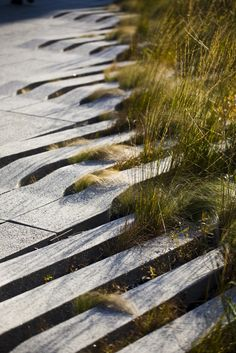 The high line, NY Photo by Nicholas Noyes