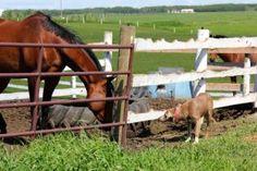 This is why you buy an acreage!  Debbie Leah, Realtor Royal LePage Allstar Real Estate Cochrane, Alberta