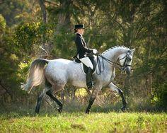 «Arabian Times›› |арабские лошади|                                                                                                                                                                                 More